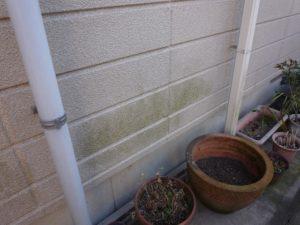 外壁コケ・藻